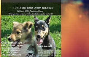 Newman Collies home page
