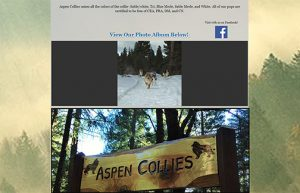 Aspen Collies home page